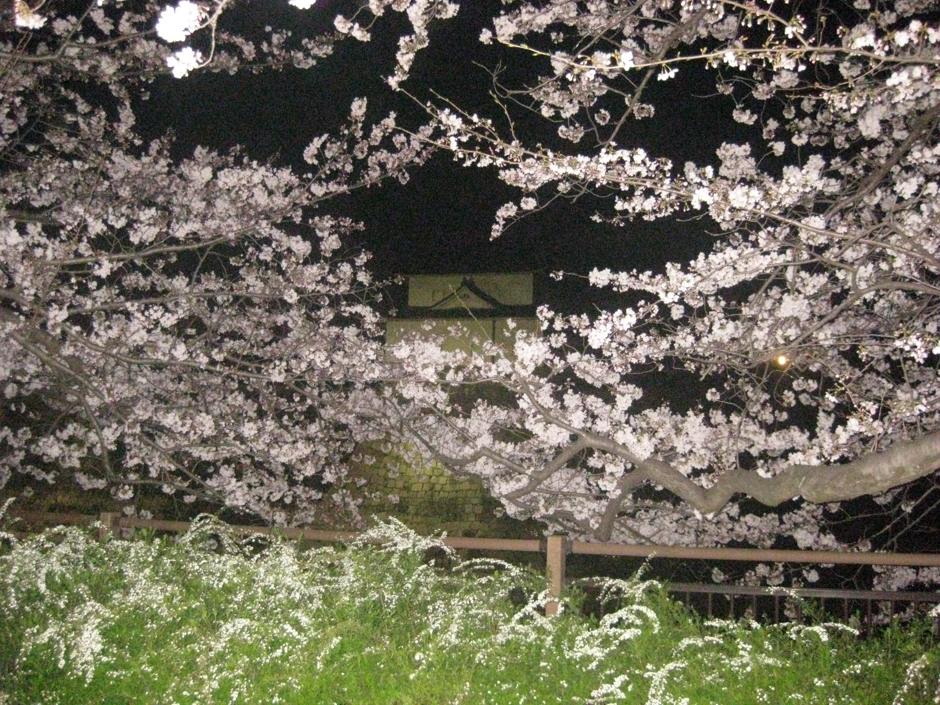 夜桜大阪城公園